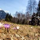 Franse Alpen in het voorjaar