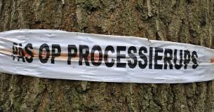 Processierups weer actief